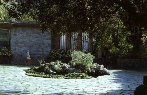 Jard n botanico canario viera y clavijo for Jardin botanico viera y clavijo